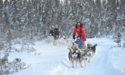escapade hivernale et traîneau à chiens